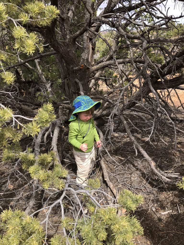 Ideas to hike with toddlers; play hide n seek!