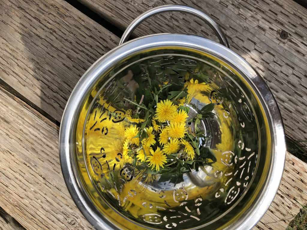 Things to do with dandelions - dandelion salad