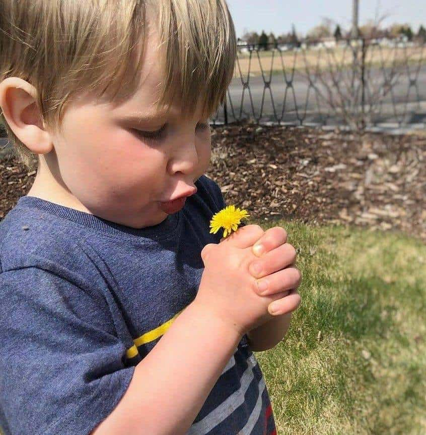 toddler playing with a dandelion