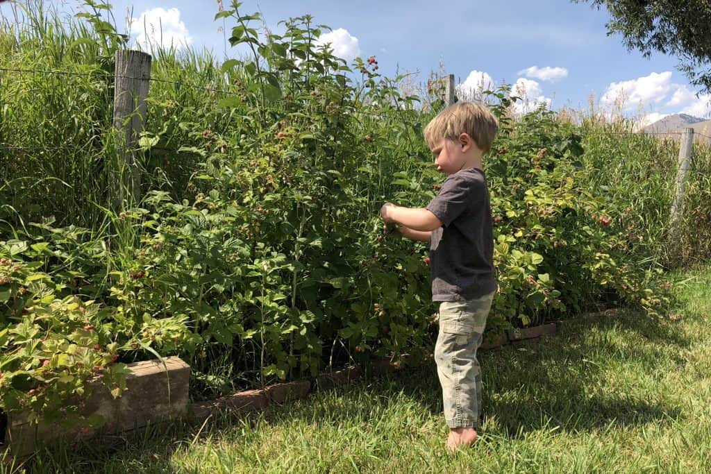 camping around berries with toddlers