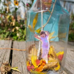 fall in a bottle leaf outdoor activity with picture
