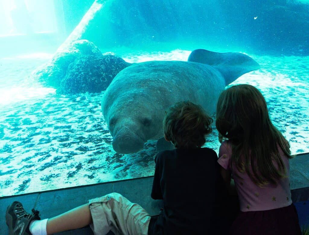 associatiation of zoos and aquariums cheap learning for kids rving