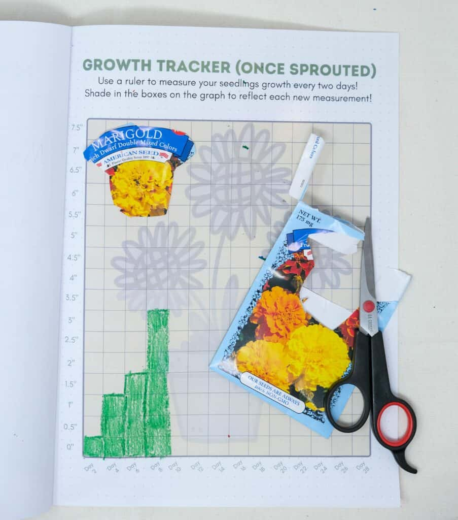 plant growth tracking chart for kids printable