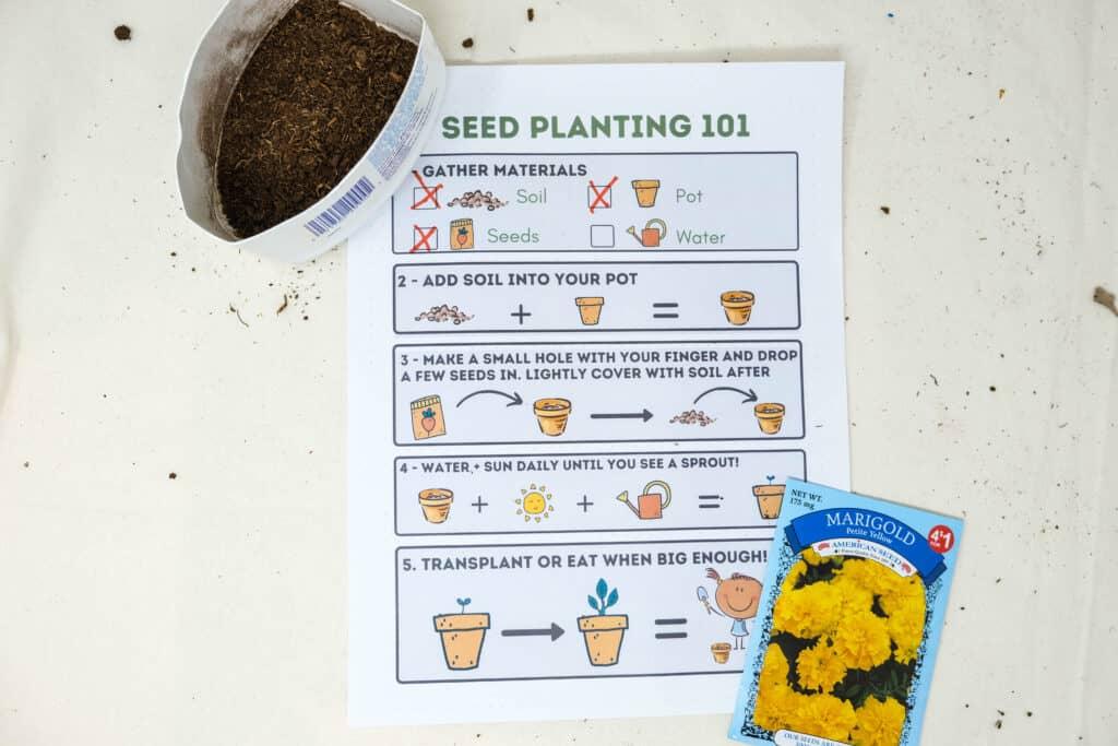 easy visual seed planting printable for kids