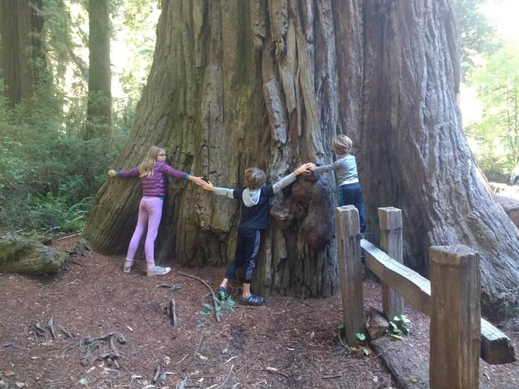 redwood state park national park educational kids activities