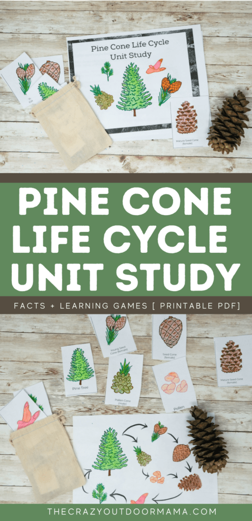 pinecone life cycle unit study activity pack for kids forest school or nature school