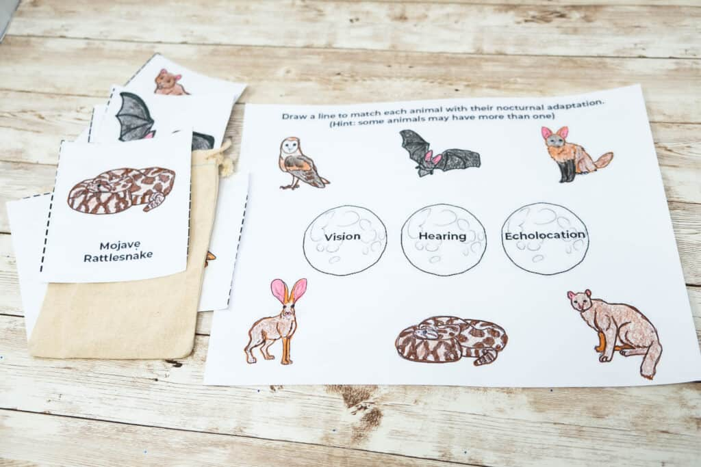 nocturnal animal activity pack