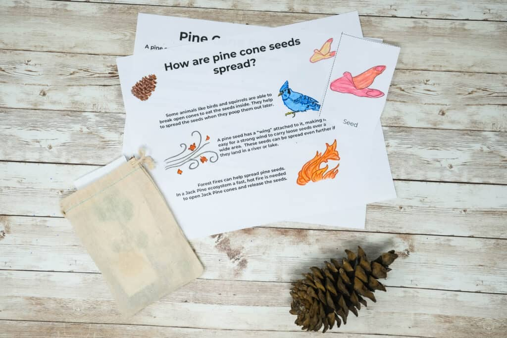 worksheet for kids how pine cone seeds are spread