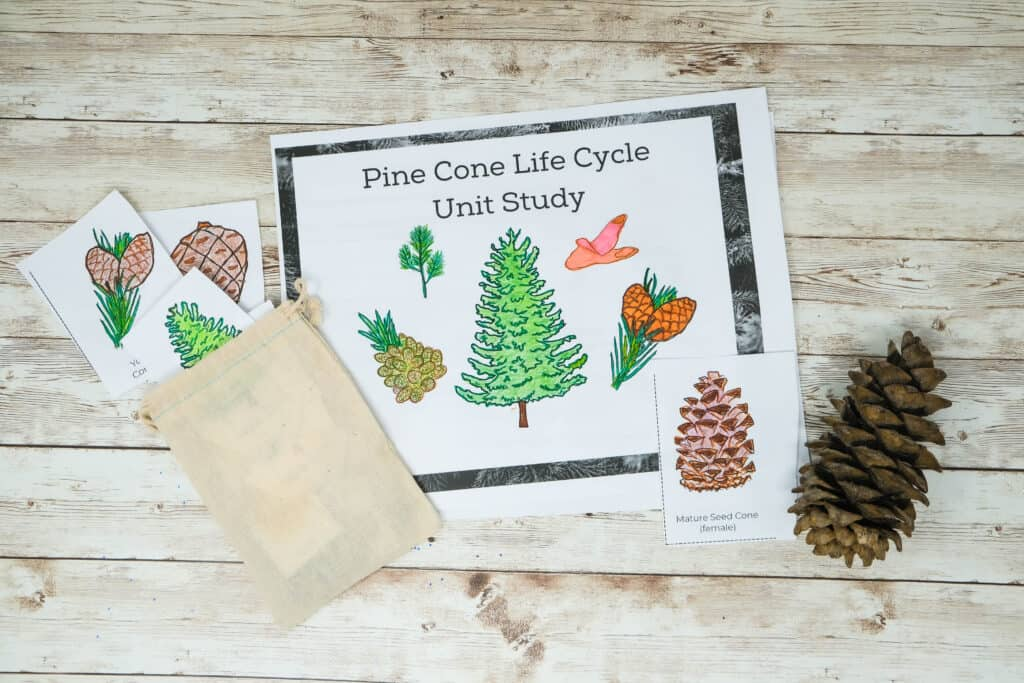 pinecone lifecycle unit study for kids