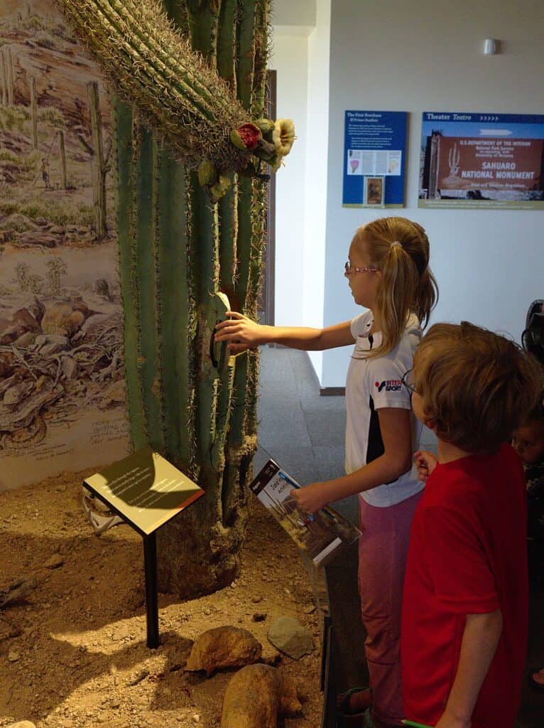 saguaro national park educationl opportunities when travling in south west us with kids