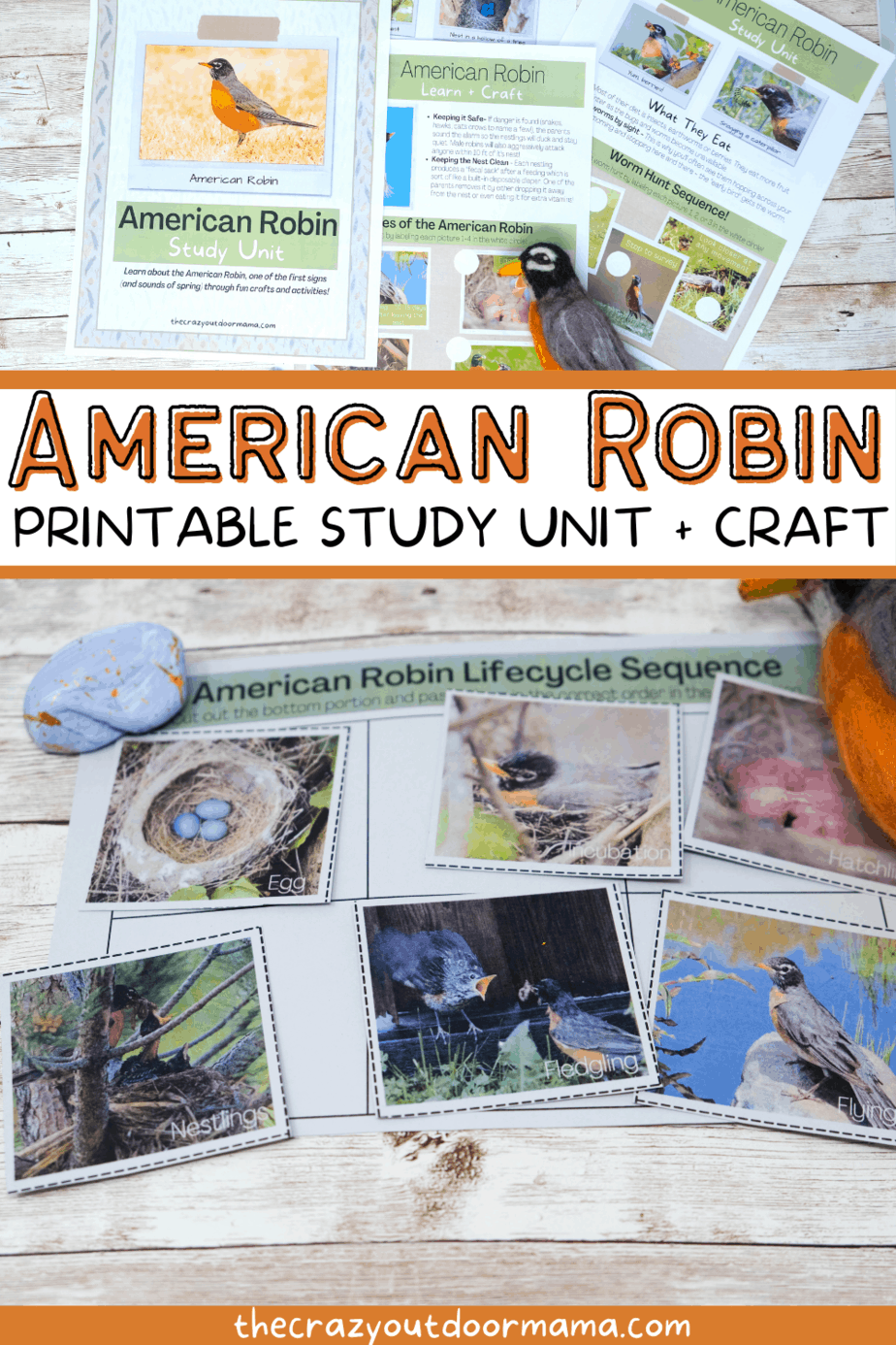 printable lesson about birds for kids