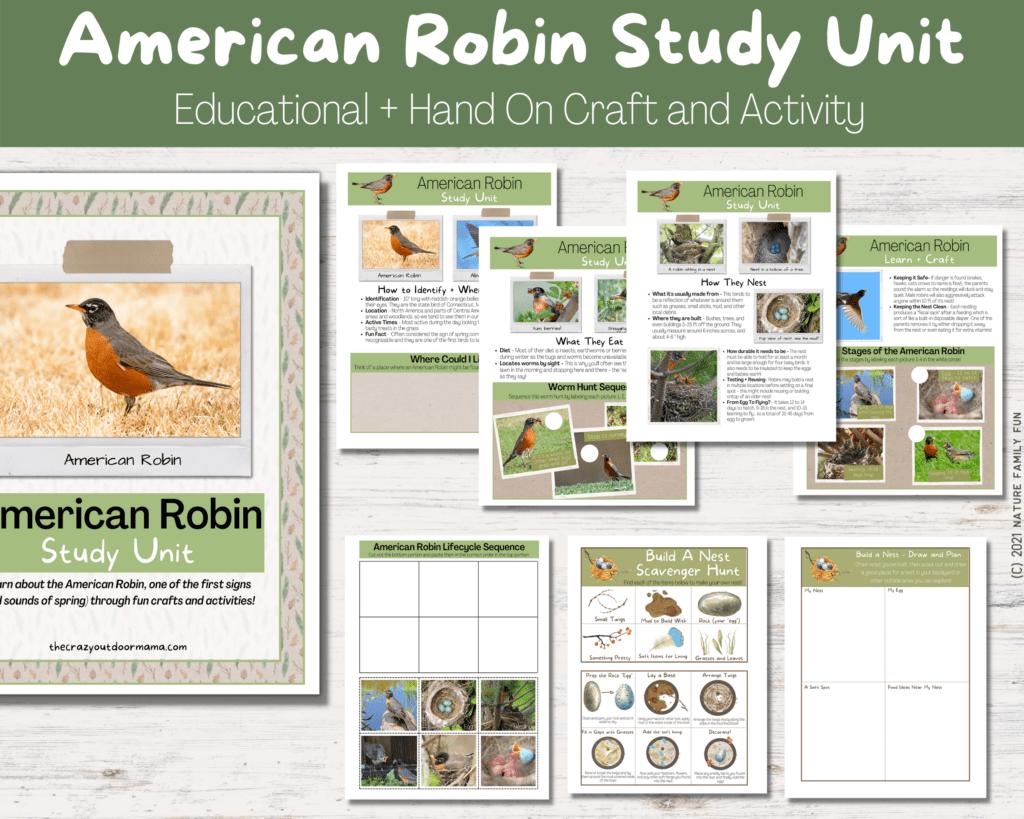 american robin printable study unit homeschooling