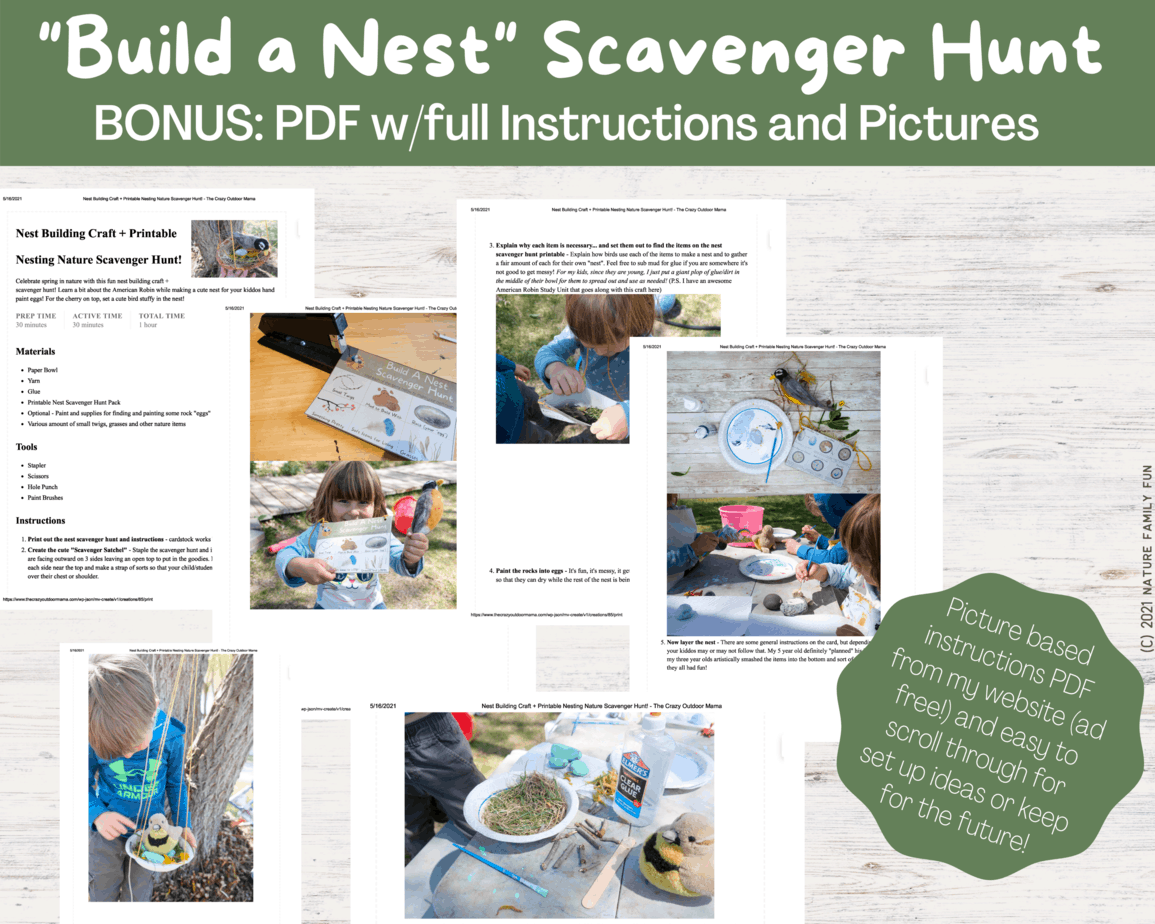 ideas for nest or bird unit in class