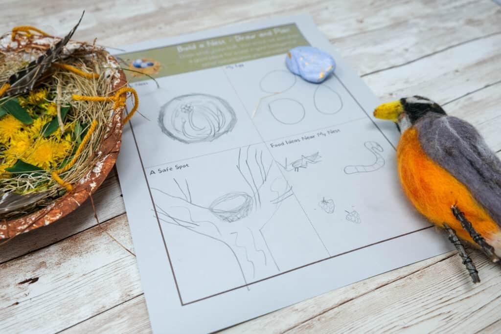American robin nest planning worksheet for kids