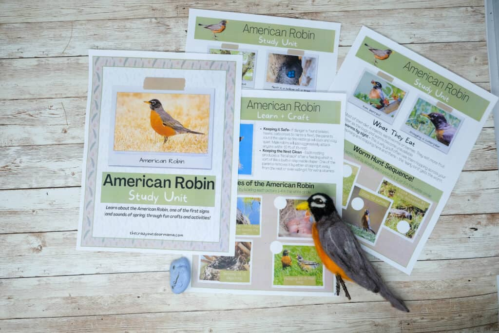american robin study unit for forest schooling or homeschooling