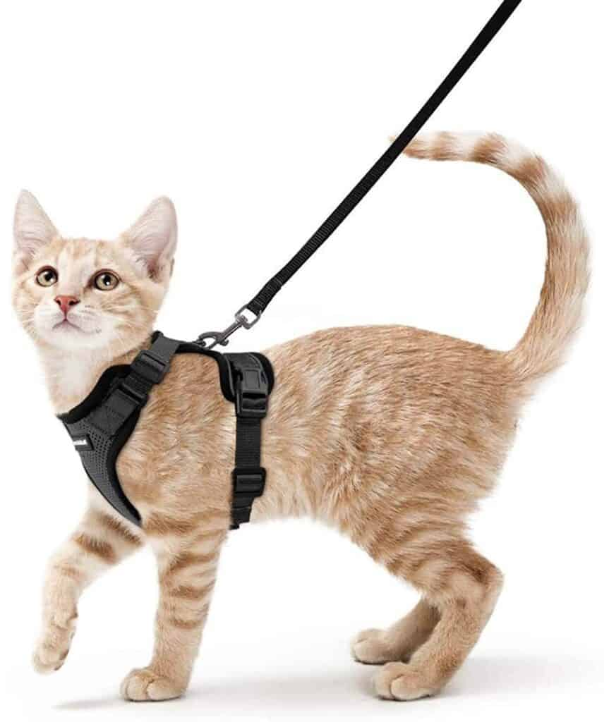 best cat harness for exploring with cat at camp
