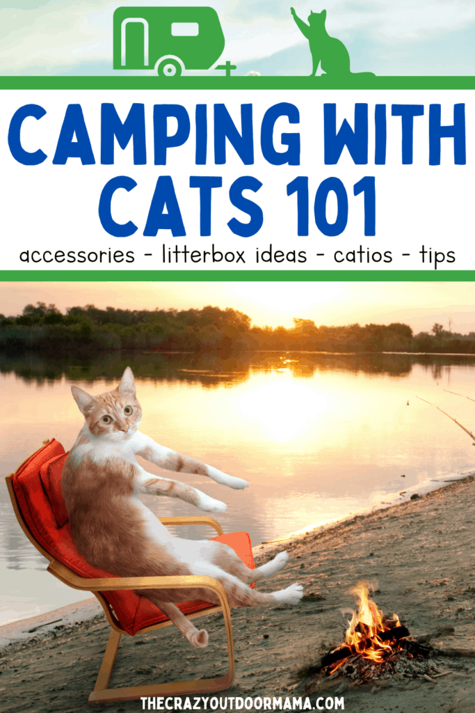 camping with cats in your rv or travel trailer tips accessories