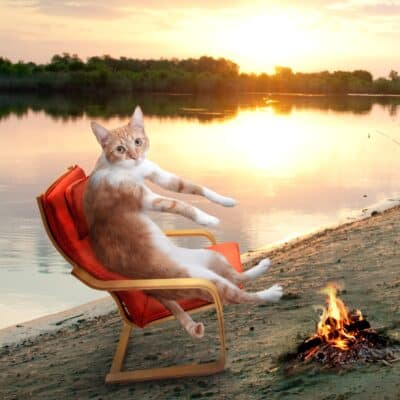 camping cat picture